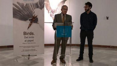 Birds-Diego-Alberto-Pardo-Asunción